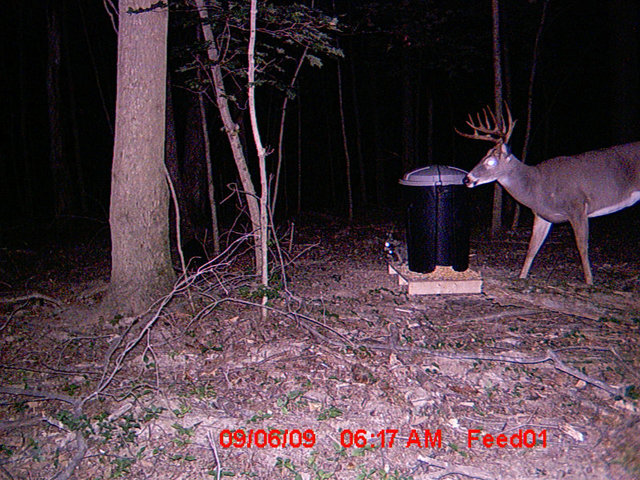 Trail Cam Over Home Made Feeder Evilbeliever